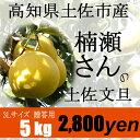 高知県土佐市産【贈答用】楠瀬さんの土佐文旦 3L/5kg