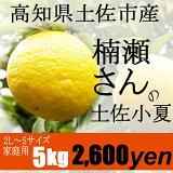 【家庭用】楠瀬さんの土佐小夏 2L〜S/5kg(日向夏・ニューサマーオレンジ)