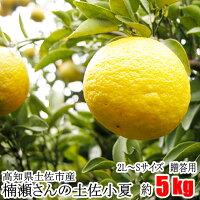 【贈答用】楠瀬さんの土佐小夏2L〜S/5kg(日向夏・ニューサマーオレンジ)
