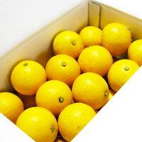 【贈答用】楠瀬さんの百年小夏2L〜M/2.5kg(日向夏・ニューサマーオレンジ)