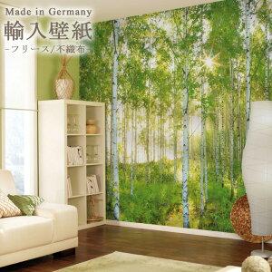自然の白樺の森や林の景色や風景を壁紙に。店舗の内装や撮影のバックペーパーとしても使えるお...