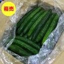 【九州産】【クール便送料無料】箱売り きゅうり(キュウリ) 1箱(5kg)