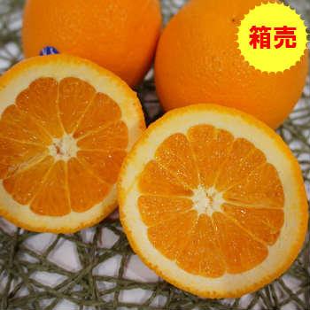 【送料無料】箱売 ネーブルオレンジ 1箱(17kg)