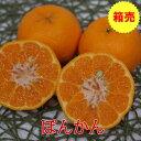 箱売 【九州産】ぽんかん 1箱(10kg)