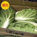 クール便送料無料【九州産】【信州産】箱売り 白菜 1箱(15kg) 1