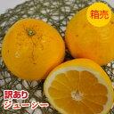 訳あり品〈送料無料〉【九州産】箱売り ジューシーオレンジ(晩柑 ジューシー) 1箱(10kg)