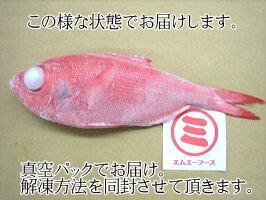 大特価!!送料無料【数量限定】東伊豆伊東港水揚<CAS>地物金目鯛