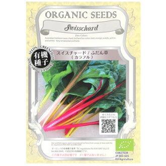 新建專案有機種子瑞士甜菜和通常草 (彩色)