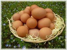 純国産赤卵