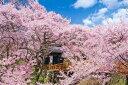 1000ピース ジグソーパズル 桜咲く高遠城址公園 長野 め