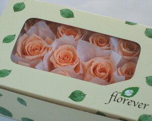 【花材】プリザーブドフラワー フロールエバーベイビーローズ1箱12輪入り シャーベットオレンジ
