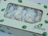 【花材】プリザーブドフラワー フロールエバーベイビーローズ1箱12輪入り パールホワイト