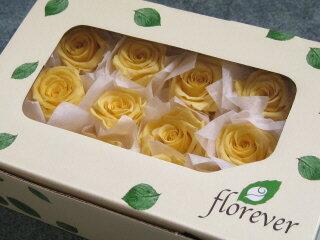 【花材】プリザーブドフラワー フロールエバーベイビーローズ1箱12輪入り イエロー