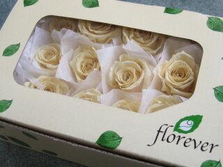 【花材】プリザーブドフラワー フロールエバーベイビーローズ1箱12輪入り ソフトイエロー