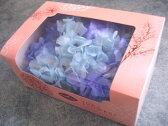 【花材 アジサイ 】プリザーブドフラワー TOKA東北花材ソフトあじさい彩1箱 ブルー×ブルー