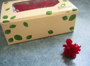 【花材】プリザーブドフラワー フロールエバーミニカーネーション1箱12輪入り チェリーレッド