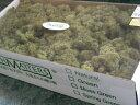 【花材】プリザーブドフラワー花材 大地農園アイスランドモス大箱 モスグリーン