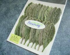 【30%オフ】プリザーブドフラワー 大地農園ソフトラムズイヤーリーフ1袋20枚入り グリーン