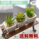 【送料無料】フェイグリーン 多肉植物 3個セット フェイクグリーン  ...