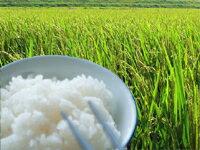 減農薬で育てた安心で美味しい新潟米【奥越後岩船産コシヒカリ愛情米玄米15kg】