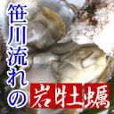 笹川流れ産岩牡蠣