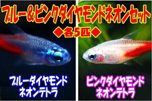 ◆宝石のようなキラキラコンビ◆ 売れ筋ブルー&ピンクダイヤモンドネオンテトラ各5匹セット