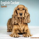 English Cocker Spaniel 2021 Wall Calendarの商品画像