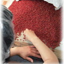 十勝産 大粒赤ダイヤ小豆 500グラム 2