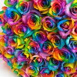 本数を選べるレインボーローズ花束誕生日やお祝い、記念日に年齢分の本数でプレゼント【薔薇バラ虹プレゼントギフト誕生日歓送迎会結婚祝い還暦祝い記念日プロポーズ母の日指定日配達対応土曜営業】