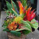 おまかせ!ハワイアンバスケットフラワーアレンジ5000 花 ギフト 誕生日 アレンジメント フラワー...