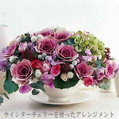 切り花にもなる高性種葉牡丹(ハボタン) ウインターチェリー 2株