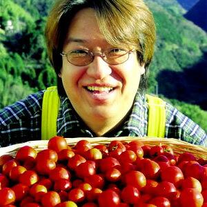 家庭菜園シリーズトマト名人坂本さんのフルーツトマト 1株