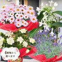 母の日 プレゼント ギフト 花ジャスミン ラベンダー クチナシ等 人気のお花たちスイーツセットにもで