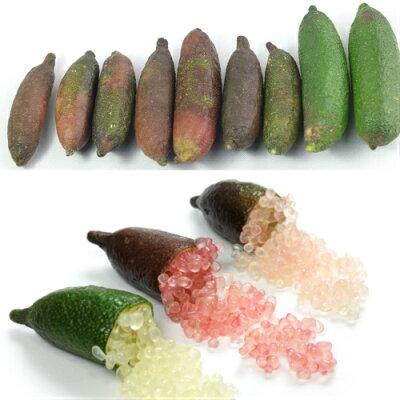 果肉の色が多彩なフィンガーライム