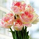 チューリップ アンジェリケ 八重咲き5球パック秋植え 冬植え 春咲き 球根 イングリッシュガーデン