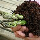 店長プロデュースアスパラ用に開発したけど、果樹苗などたくさん収穫する為に最適な専用肥料培...