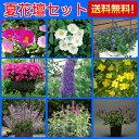 夏花壇セット植えてお花がすぐに楽しめる夏開花の花苗セットです*送料無料・他品と同梱OK*ただし、お届け地域によっては差額送料が発生します。