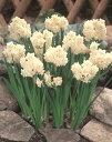 水仙 エルリッチャー ほのかな甘い香り3球パックスイセン 秋植え 冬植え 春咲き 球根 イングリッシュガーデン