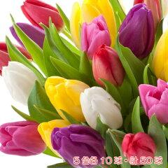 これはナイ!工藤静香がトイレに枯れた花を飾り「なんだかホッとしますよ!」