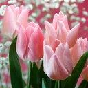 チューリップ ピンクダイアモンド 一重咲きプランター1杯分のチューリップ 全国送料無料20球パック秋植え 冬植え 春咲き 球根 イングリッシュガーデン セット