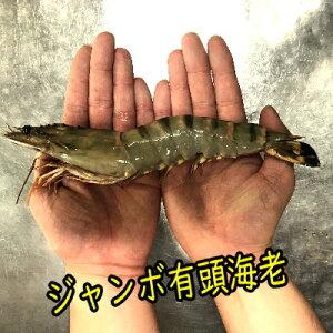 【商番1801】特大有頭海老 1匹 ジャンボエビ バーベキュー 海鮮 通販特価 おすすめ