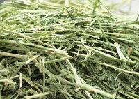 【送料無料特価】牧草市場アルファルファプレミアム(牧草)3kg(500g×6パック)