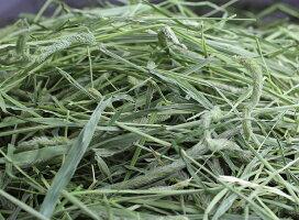 牧草市場30年度産新刈り1番刈りスーパープレミアムチモシー