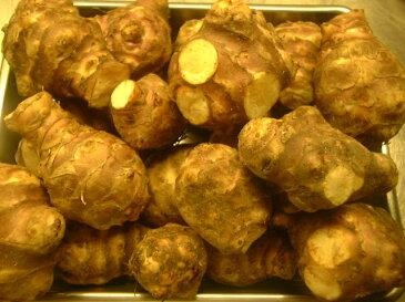 フランス産・イタリア産 トッピナンブール(菊芋)約500g