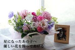 フォトフレーム付星になった○○ちゃんB/ペットちゃんお供えの花 ペット供養花(フラワーギフト ...