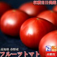 \糖度10度以上/高知県春野産高濃度フルーツトマト約2kg家庭用高糖度収穫当日発送100日トマト送料無料