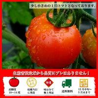 高知県産トマトのお届け内容