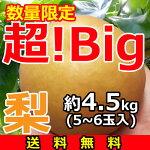 超特大梨5kg-正方形