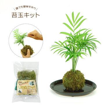誰でも簡単アレンジ♪これさえあれば可愛いオリジナル苔玉が作れちゃう!お手軽手作り苔玉キット