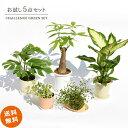 観葉植物 インテリア おしゃれ 卓上サイズ お試し5点セット